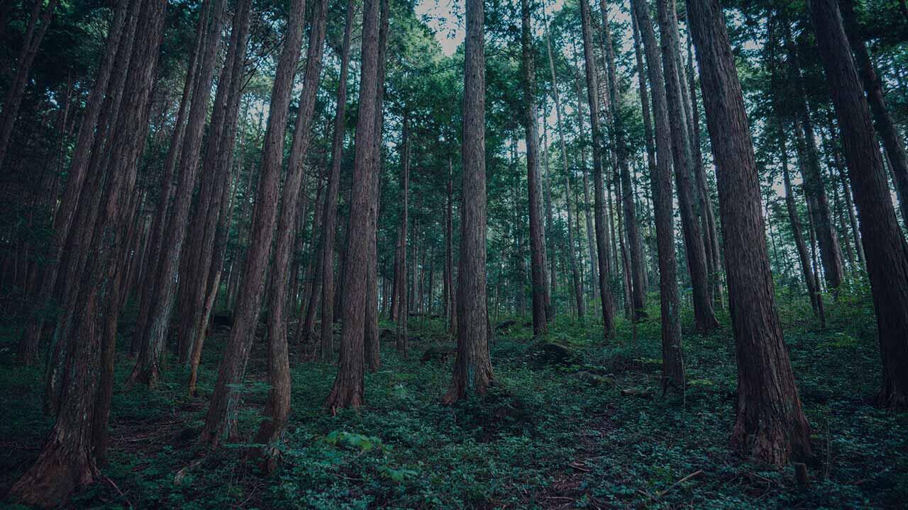 三和木の注文住宅のルーツである、自社保有で育む山林の木々。