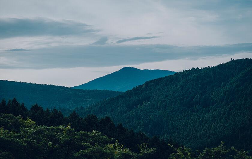 上質な木々を育む白川の山々。